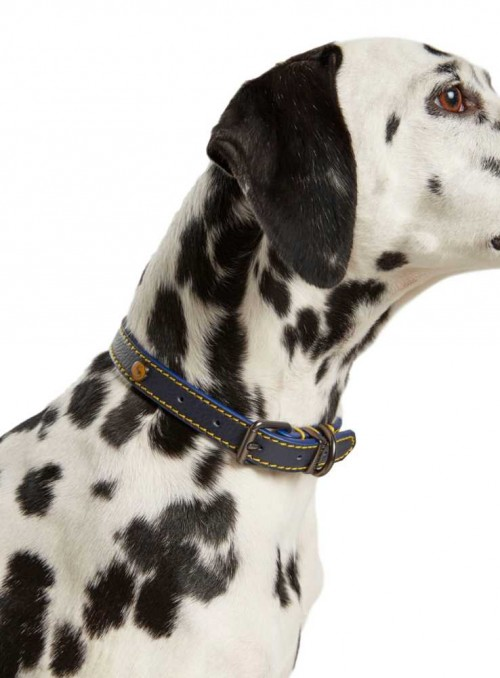 Dog Collar Navy Leather from Joules